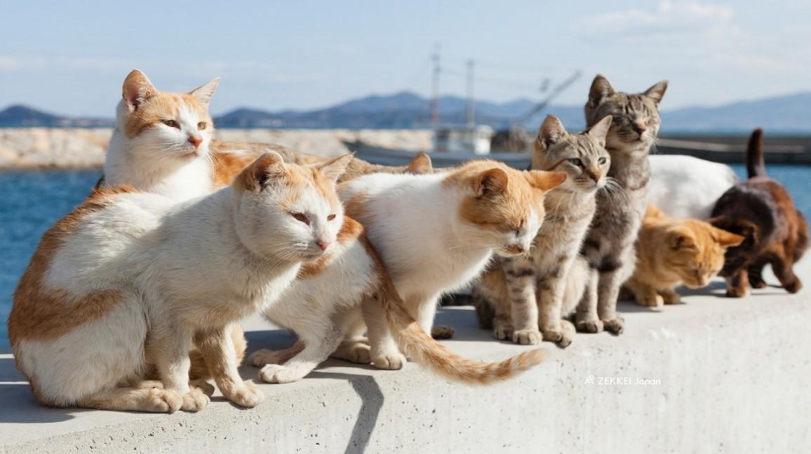 2018年12月秋田サロン定例会 『野良猫ちゃんと地域の共存を考える』NEW